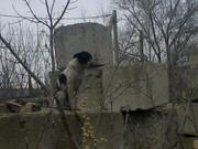 Дарю щенят и пару собак повзрослее. Симпотичные смеси известных пород.