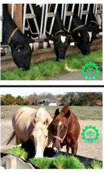 Гидропонное оборудование для выращивания готового корма. Караганда